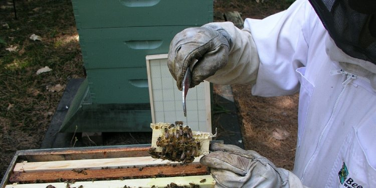 A YouTube guide to beekeeping