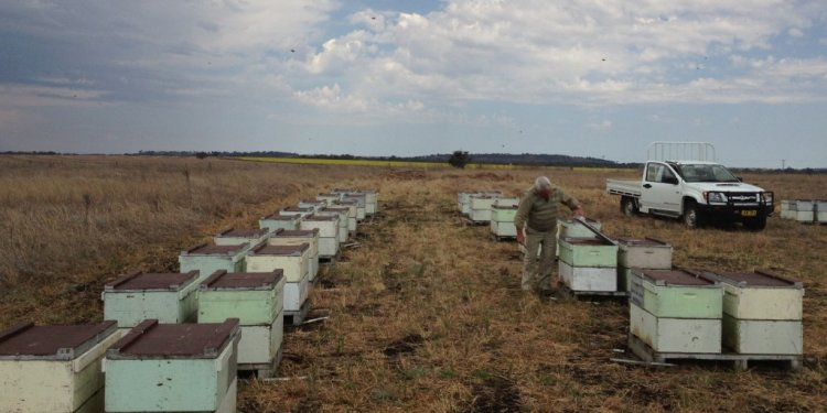 A load of bees ready for