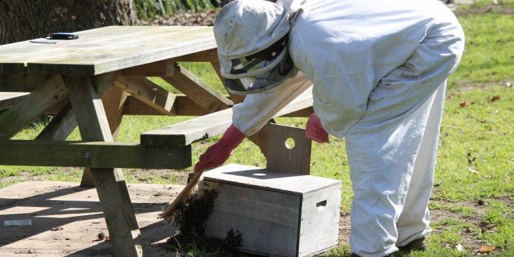 Adrian Iodice from Beekeeping