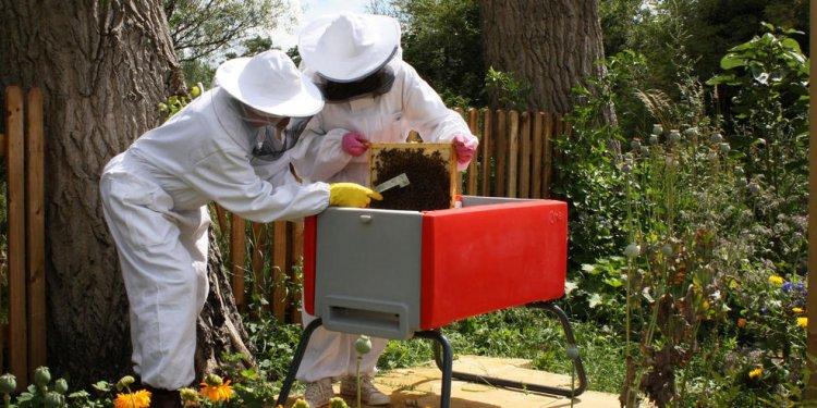 Beehaus beehive in garden with