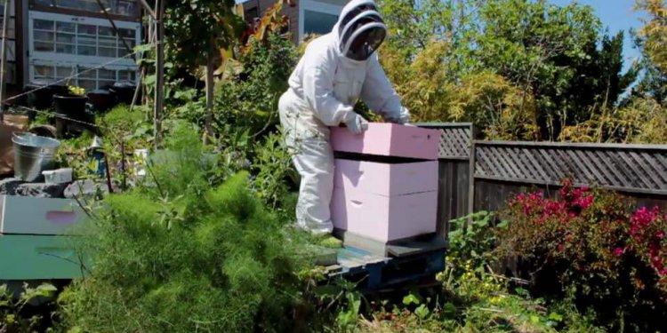 Beekeeping Apprenticeship