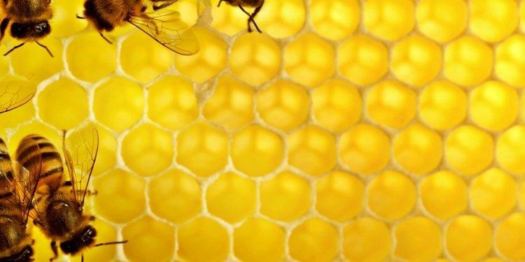 Bartow Beekeepers