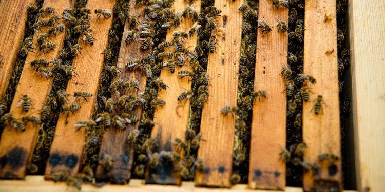 Bindaree Bee Supplies