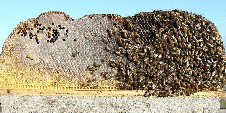 Long Hive TTBH Open TTBH Comb