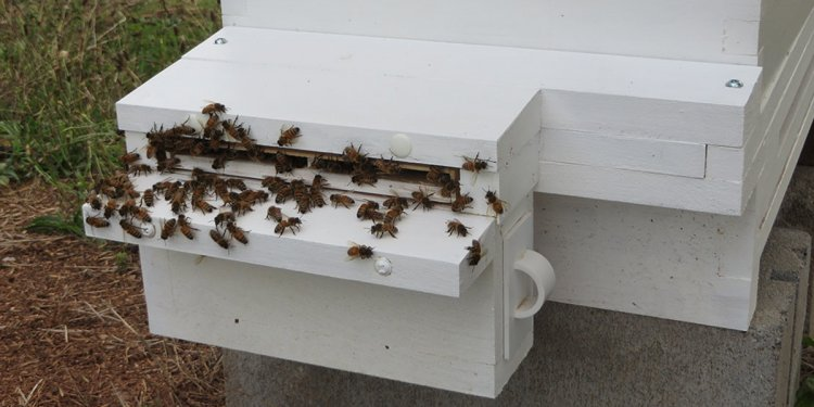 Buy Small Hive Beetle Entrance