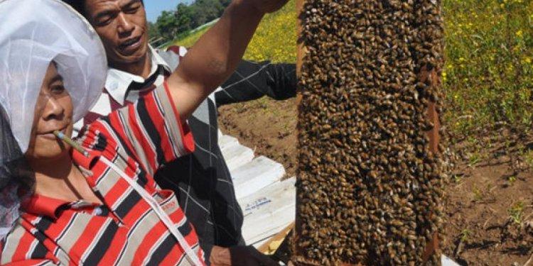 Modern beekeeping and