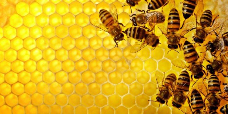 Dixie Bee Supply |