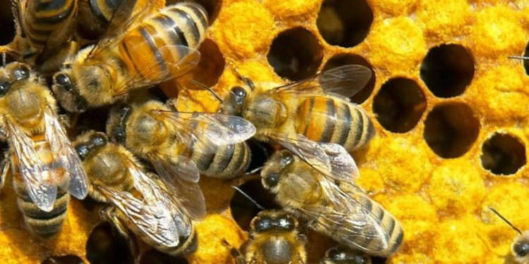 Gaston County Beekeepers
