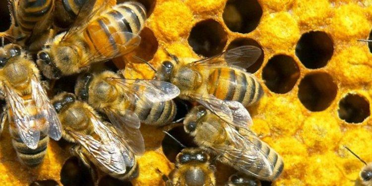 Gaston County Beekeepers