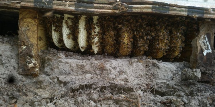 Honeycomb and colony
