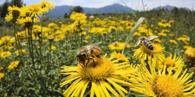 Bee-and-daisy-1024x576