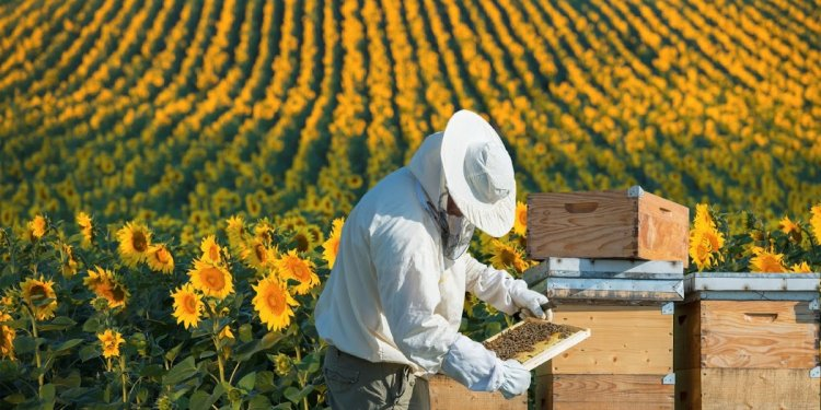 How to Start a Beekeeping