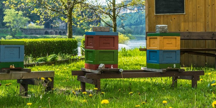 How To Start Honey Bee Farming