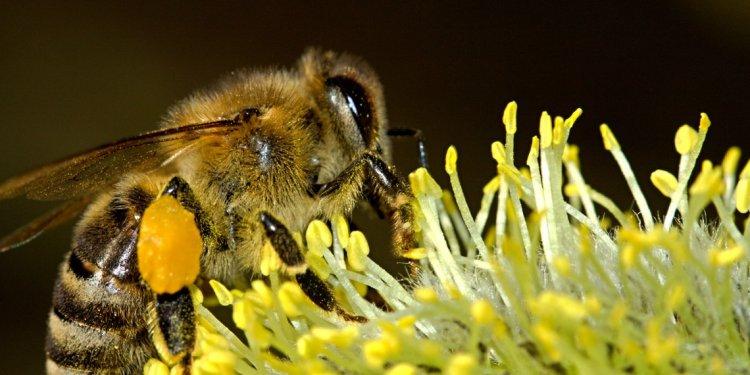 Illinois Beekeepers Recognize
