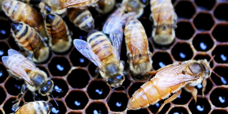 In win for beekeepers