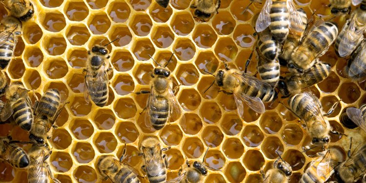 Insecticide Harms Bee Colonies