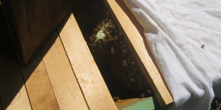 Linda s Bees: Beyond