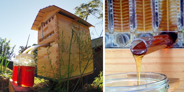 New Beehive Lets You Harvest