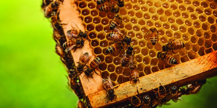 The Buzz About Beekeeping