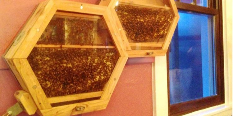 Our Clown face target