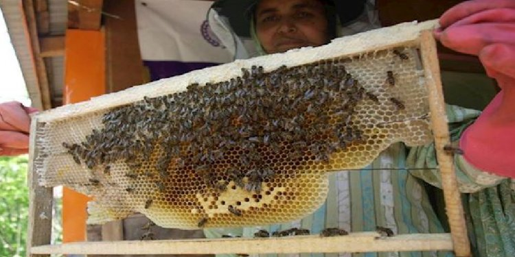Honey-bee farm funded by