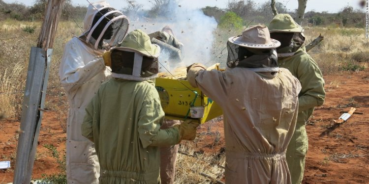 Research, using bees as