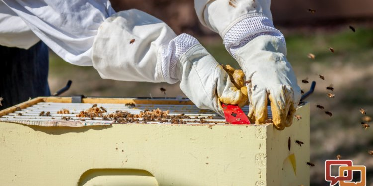 So you want to be a beekeeper?