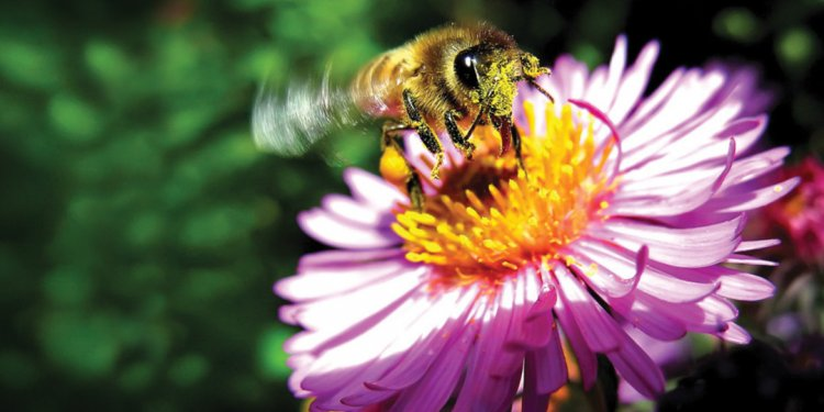 The Bee s Knees