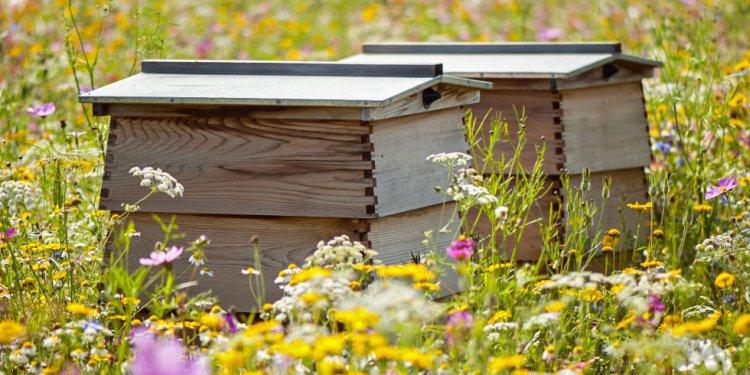 Beehives in flowers