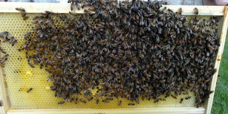 The Warren County Beekeepers