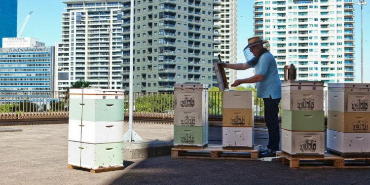 Urban beekeeping and supplies