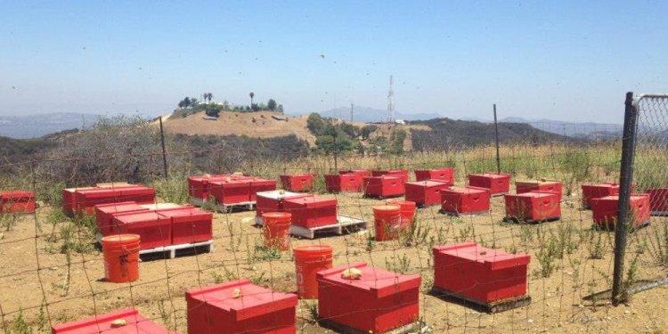 Ventura County Beekeeping