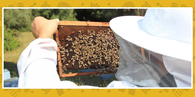 Virginia State Beekeepers