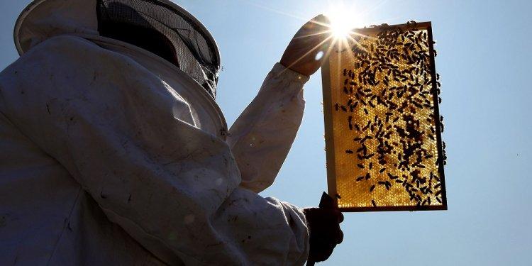 Beekeepers Association