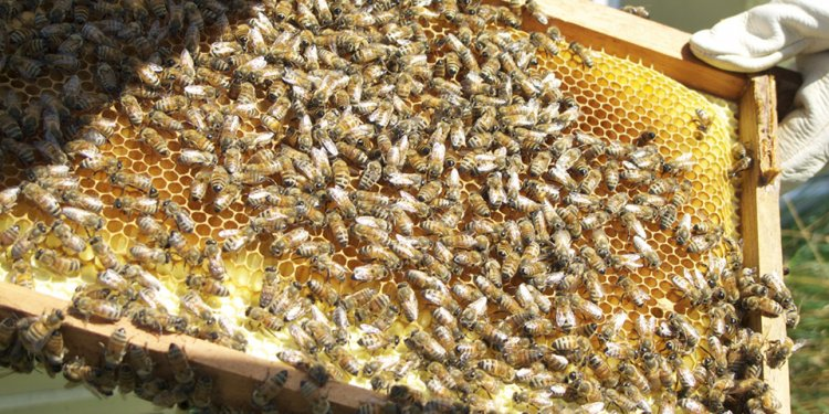 Now, with beekeeping s