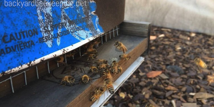 Beekeeping Supply Companies
