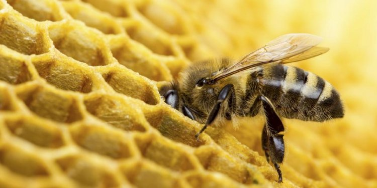 Beekeeping income