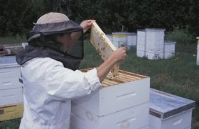Beekeeping 101: gear and clothes