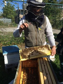 Beekeeping Bees Chicago