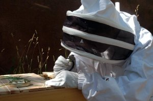 Beekeeping_Protective_Gear_working_top_bar_hive