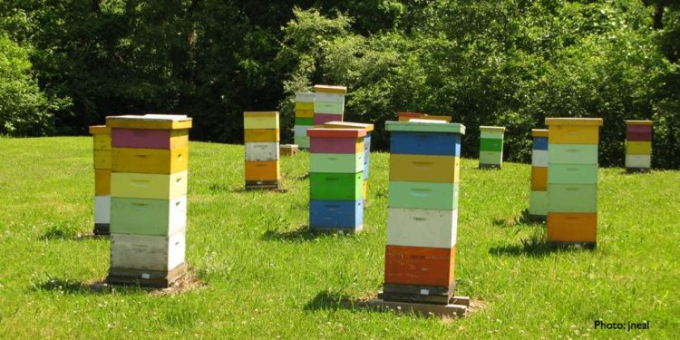 How to make honey bees Boxes?