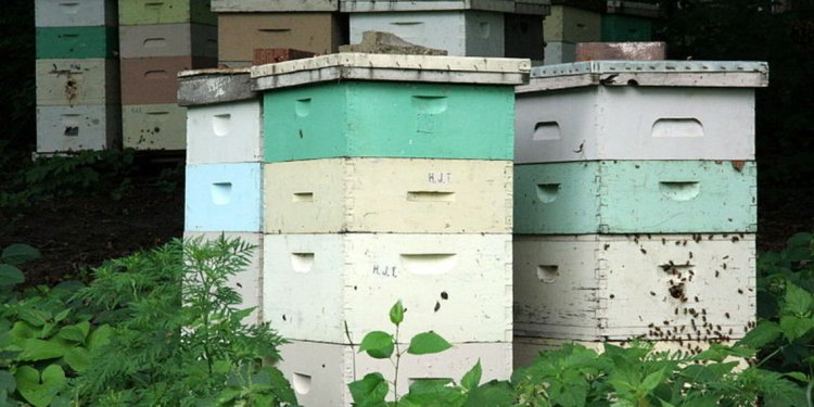 Bee boxes plans