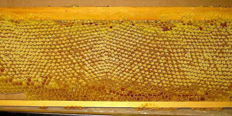 Foundationless Beekeeping
