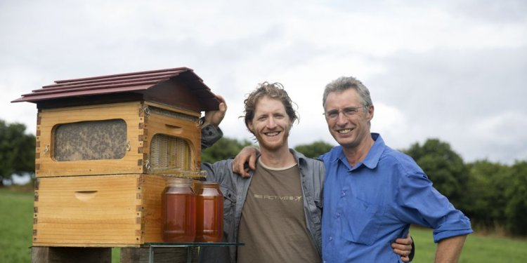 How to raise honey bees?