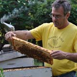 Frank Licata, Beekeeping Course teacher
