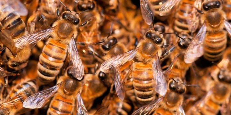 How to take care of honey bees?