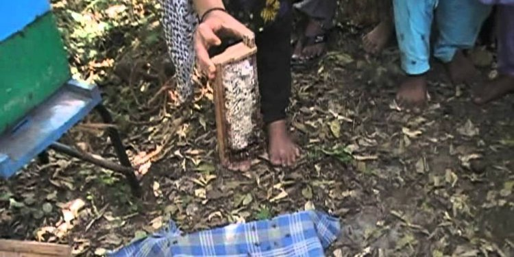Apiculture of honey Bee