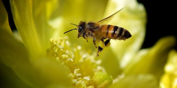 Best bees for honey