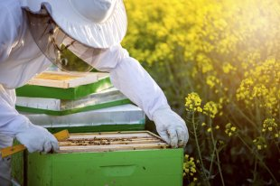 steps to start a fresh Bee Colony