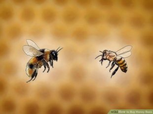 Image titled Buy Honey Bees action 1